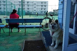 美女&美犬.jpg